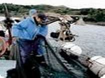 【自営の定置網】平戸で唯一、自営の定置網を持つので新鮮な魚を仕入れる事ができます。