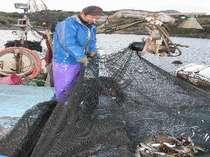 自営の定置網から獲る新鮮な魚を提供致します