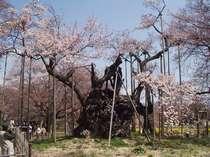 ♪♪日本最古のお花見プラン【一泊二食】♪~