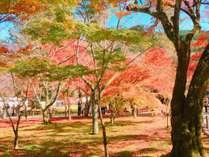 紅葉シーズン到来!絵画のような風景にうっとり♪