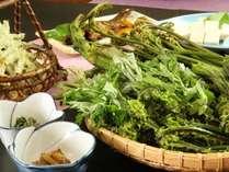 【山菜】近くの山でとれた山菜等、地場産食材が豊富