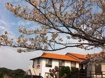 館山の春。サニーフィッシュ近くの桜。