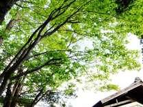【お庭】当館の周りにある豊かな自然を感じてみてはいかがでしょうか