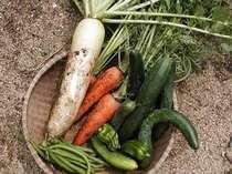 いいものだけを食べて頂きたい!自家農園で作ったこだわり食材♪