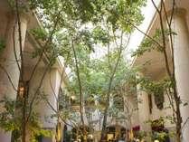 ロビーにそびえ立つベンジャミンの木々