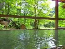 夏の露天風呂は、鮮やかな緑と開放感が格別☆