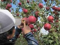 どのリンゴが美味しいの?など、せっかくなので、プロにリンゴのあれこれ教えてもらっちゃいましょう♪