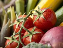 ●上柳屋オーガニックファームの野菜