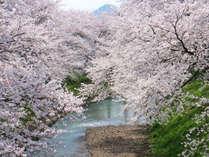 【お花見プラン】ステーキ・鮑・お造りなど春の豪華な夕食×温泉で春爛漫♪≪お部屋食≫