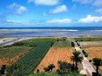 敷地内から見えるサトウキビ畑と太平洋の海