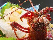 【伊勢海老お刺身】ぷりぷり食感と上品な甘味が味わえるイセエビをお刺身で♪