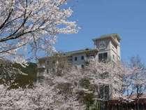 四季折々の花木が敷地を彩る当館でも春は特にオススメ!桜が敷地いっぱい咲きます。(3月末~4月初旬頃)