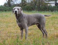 我が家の愛犬 ライカ