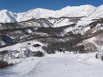 栂池高原スキー場:栂の森ゲレンデ