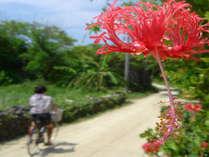 自転車や歩いて花*花さんぽ♪ いろんな発見に出会えるカモ・・・