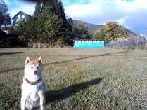 童夢に隣接する天然芝約4000㎡の広大なドッグラン兼洋弓場。愛犬の表情がいつもと違いいきいきと!