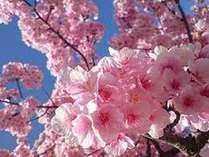春割(イメージ)
