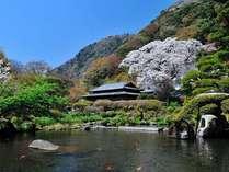 日本庭園(春)※山桜満開風景