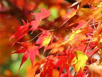 *【紅葉(イメージ)】木々が色づき情緒を増した景色をご堪能下さい。