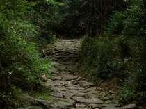 【熊野古道送迎付きプラン】ツヅラト峠・馬越峠ウォーク