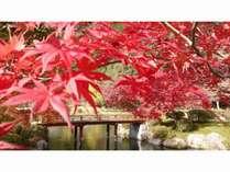 【〇〇な秋プラン】露天風呂付き客室でまったり♪「秋」を存分に楽しむ ★特典付き★