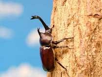 【夏休み企画】お子様歓迎★夜の森探検隊!カブトムシ採集に出かけよう!! ※月~木曜日限定