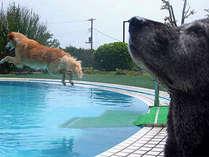 *5月末~10月ごろまでOPENしている、ペットと泳げるプールです!