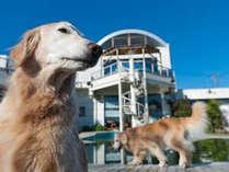 ペット連れ専用 プチホテル サンロード