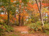 秋の森林浴コースは紅葉です。9月頃から紅葉が始まり、11月上旬までお楽しみいただけます。