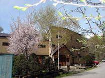 5月中旬の外観。新緑、満開の桜、すももの花が咲き誇ります。