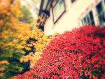庭の木々(10月下旬)