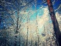 木々の合間から青空