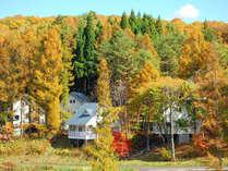 「東京ドーム6個分」の敷地が一斉に秋色に染まるその風景は、まさに「圧巻!」の一言