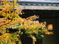 お食事処『三軒茶屋』周辺も紅葉スポットでございます。
