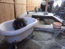 天然温泉の貸切風呂(半露天)にはワンちゃんも一緒に入れるバスタブをご用意しております