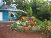 *広い庭真ん中に、花壇が有ります。一年中お花が咲いています。