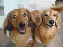 愛犬 ココ&ララ