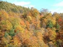 武尊の紅葉は色鮮やかで感動