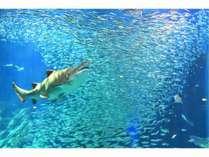 マリンワールド/サメと魚たち