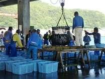 黒潮の恵み・新鮮魚介の水揚げ・ある日の魚市