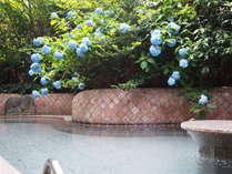 紫陽花が咲く「深湯露天風呂」