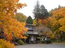 【秋の外観】鮮やかに染まる木々
