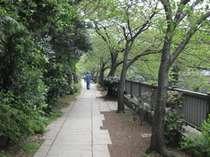 湯上がりに当館のすぐ横を流れる松川遊歩道散策<当館から徒歩約3分>