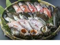 新鮮な魚介の写真です。