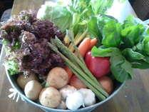 みずみずしい高原野菜が主役。