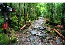 原生林の苔の森はまさに原始の世界でパワーを注入。