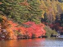 白駒池の紅葉。