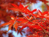 鮮やかな紅葉・・・紅葉情報はお気軽にお尋ね下さい♪