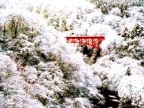 冬の絶景アクティビティ 白と赤にコントラスト高井橋