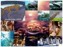 【入園券付】★元気な動物たちと出会うHAPPY♪旭山動物園へ行こう!プラン★◎和洋バイキング朝食付◎